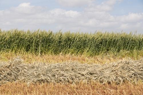 Crops Farm Image