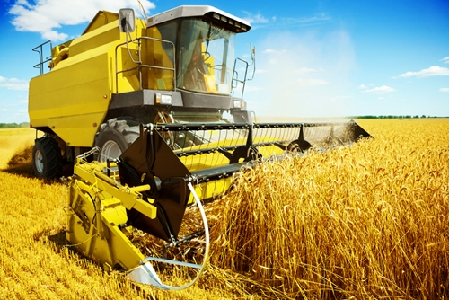 wheat Harvest Farm Image